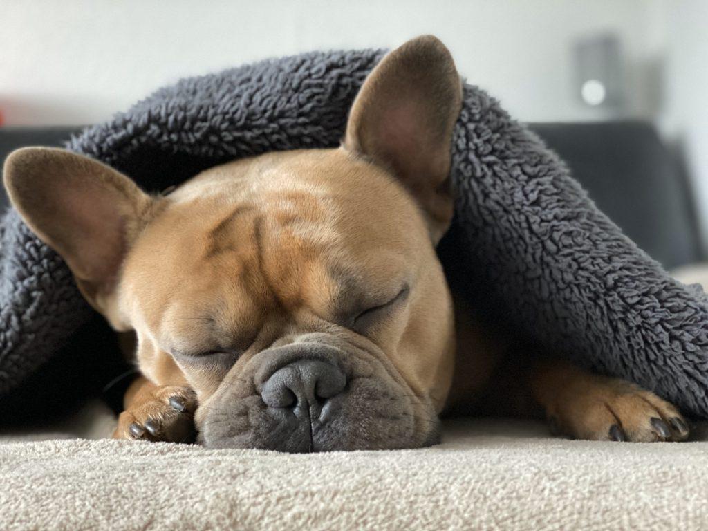 bulldog insurance
