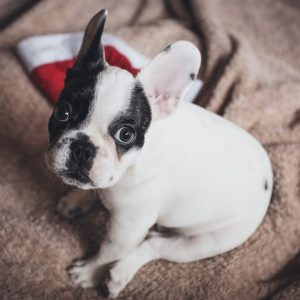 puppy prep